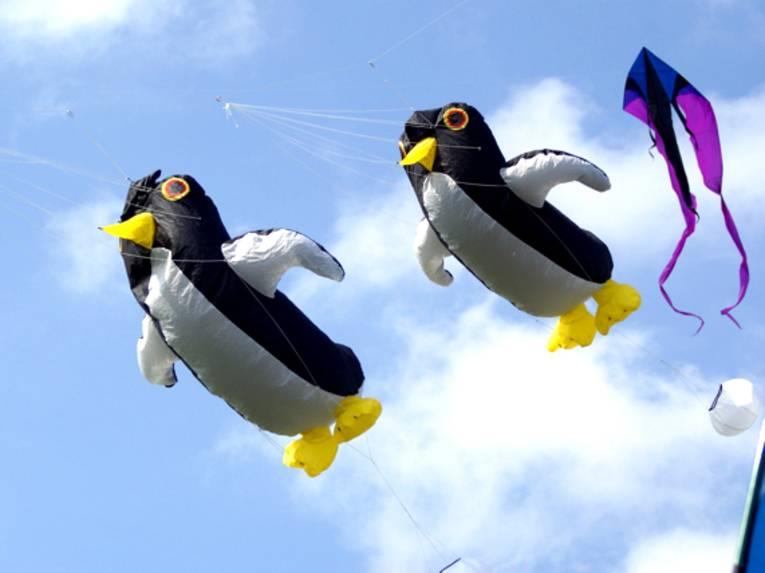 Zwei Drachen in Form von Pinguinen und ein lilafarbener Lenkdrachen vor blauem Himmel.